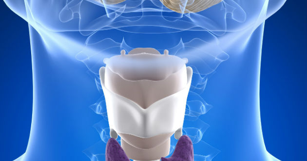 ¿Qué es la glándula Tiroides?